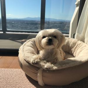 懐かしの座敷犬