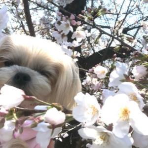 春はいいね〜