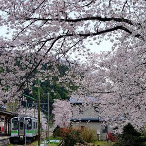 電車と桜(弥彦駅)