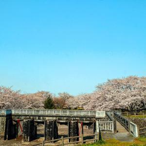 桜と分水門(加治川治水公園)
