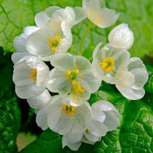 花々(栂池自然園)