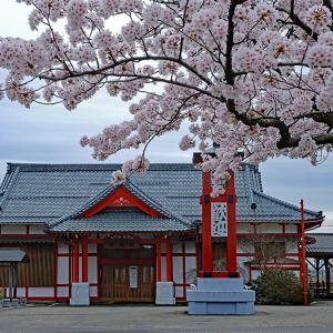 桜(弥彦駅前)