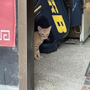 出て行かない猫君。