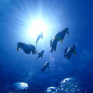 海の日は夏の石垣島☆