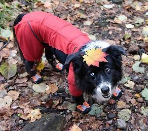 秋・・・ 旅に出た (氷点下~っ)