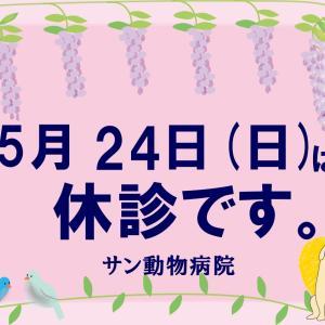 今週末のお知らせ/新たな住人(?)