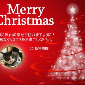 しいちゃんからのクリスマスカード