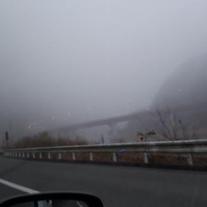 今日も霧…