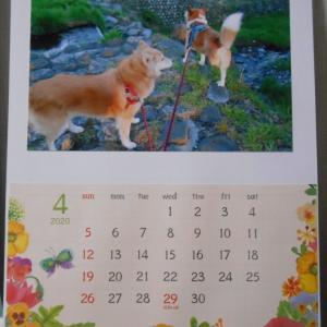 4月のカレンダーと日本臨床獣医学フォーラムの最新記事