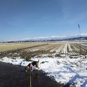 1月は、降雪ゼロ、2月で初雪かな