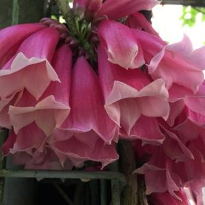 新 緑仙の日々是好日(葉と花と実の多様性)