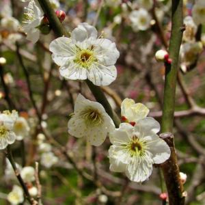 新 緑仙の日々是好日(春いっぱいですよ〜Part1)