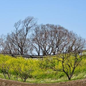 新 緑仙の日々是好日(かたまってま〜るく咲く)