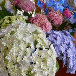 新 緑仙の日々是好日(三七日洒水忌の紫陽花)