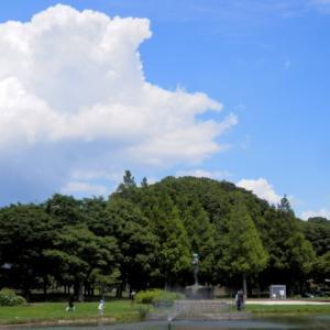 新 緑仙の日々是好日(睡蓮の咲く公園)