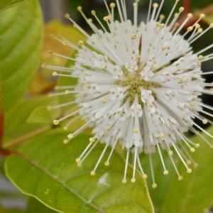 新 緑仙の日々是好日(面白い別名を持つ花)