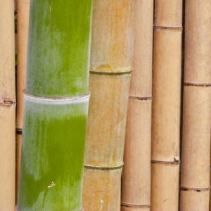 新 緑仙の日々是好日(竹の音)