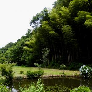 新 緑仙の日々是好日(通称 西山荘)