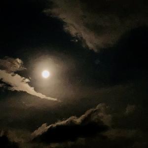新 緑仙の日々是好日(夏の月夜)
