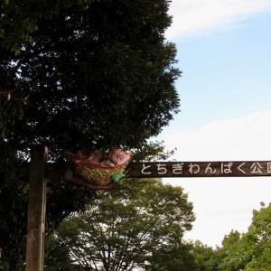 新 緑仙の日々是好日(とちぎ わんぱく公園)