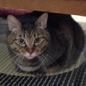 我が家の猫(美優・雄)が、…癌に