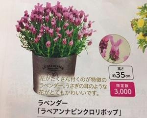 母の日に来た花が、