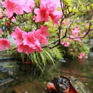 花の下の歓談
