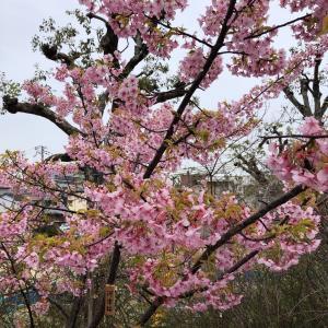 江坂で見つけた春❗️