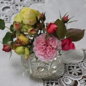 ☆庭バラの水やりと仮剪定