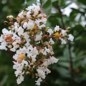 ◎ルドベキア タカオetc &種まき葉ボタン苗
