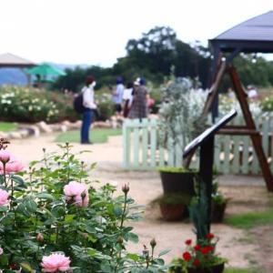 ☆イングリッシュローズいっぱい@世羅高原「花の森」その2