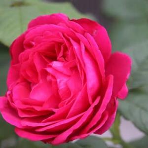 ☆庭バラ&◎庭花 七五三
