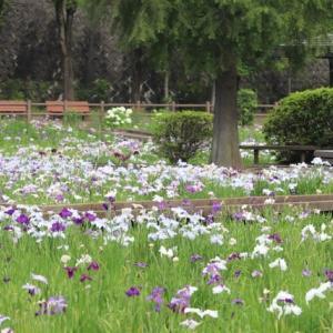 ◎菖蒲園Ⅱ@福山市春日池公園