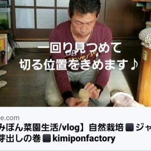 【日記20200307】ジャガイモの芽出し❣【KimiponFactory】