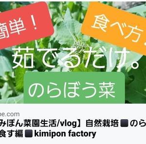 【日記20200313】初めての《のらぼう菜》収穫❣【KimiponFactory】