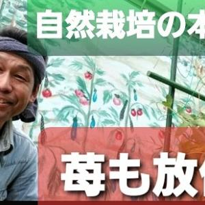 【日記20200319】苺に花が咲きました❣【KimiponFactory】