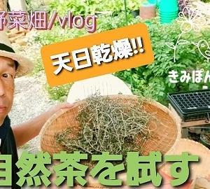 【日記20200605】自然茶を作る❣【KimiponFactory】