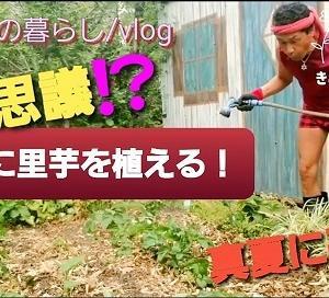 【日記20200607】苺🍓の収穫が終わり、里芋[小芋]を植え付けました❣【KimiponFactory】