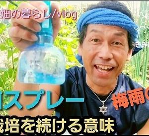 【日記20200621】自然栽培を続ける意味❓【kimipon Factory】