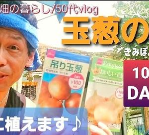 【日記20200904】【玉葱】の種を植えました❣【KimiponFactory】