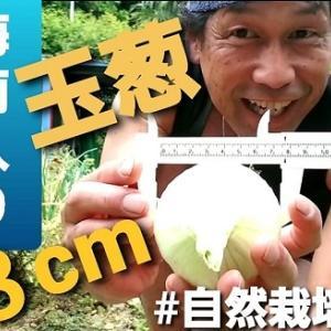 【日記20210520】5月の梅雨入り🌧️で玉葱が悲惨❣【きみぽんひろば。】