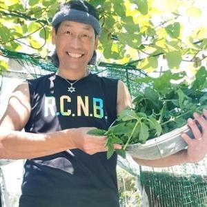 【日記20210617】アップルミント収穫❗ 乾燥します❣【きみぽんひろば。】