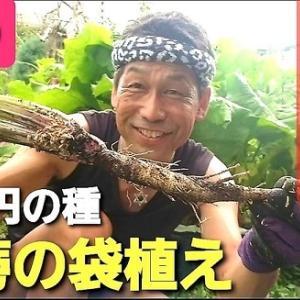 【日記20210707】DAISOの《はやどりごぼう》先発収穫(動画編)❣【きみぽんひろば。】