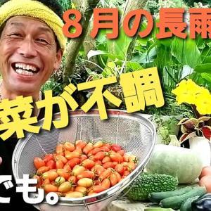 【 日記20210824/30℃】長雨☔の菜園事情❣【きみぽんひろば。】