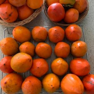 ⭐️渋柿で干し柿始めました