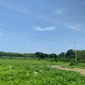 福井産地視察④ 福井梅