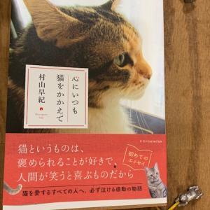 ワル猫率70%と62%のコバンとコムギ