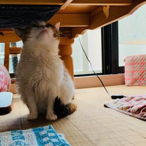 達成感のあった猫洗い