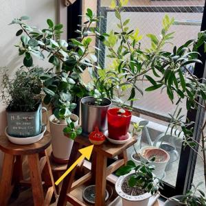 植木にわくコバエ