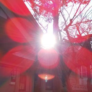 中延~荏原町散歩(蛇窪神社→法蓮寺→旗岡八幡神社→荏原カフェ)